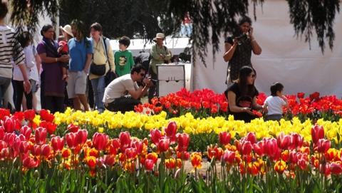 Tulip Festival 2010